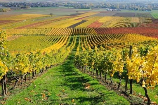 vite-vigneto-campo-autunno-felinda-fotolia-750x498